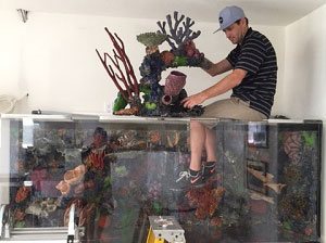 Man on Top of Aquarium Trying to Install a Coral Decoration