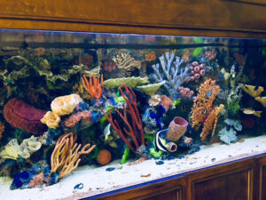 Colorful Corals and Fishes in a Large Aquarium