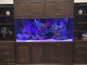 Aquarium in Between Shelves and Cabinets